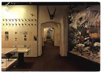 Slovenski lovski muzej Bistra