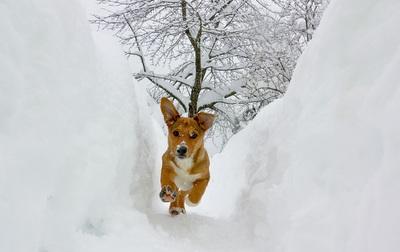 Kuža uživa v novozapadlem snegu