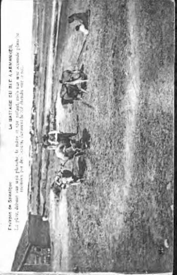 Environs de Salonique, le battage du ble a       armankeil  : le pere, debout sur une planche, la mere et son enfant, assis sur une seconde planche trainees par des boeufs, ecrasent le ble etendu sur le sol [Γραφικά]