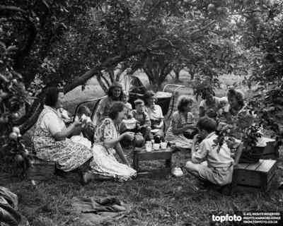 Tea break for apple pickers