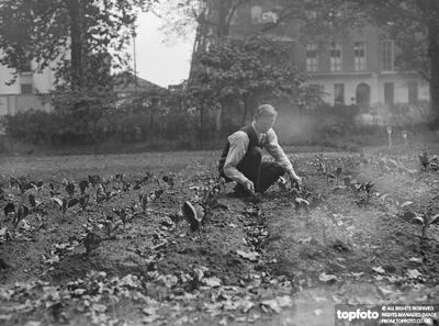 Vegetables were grown in London