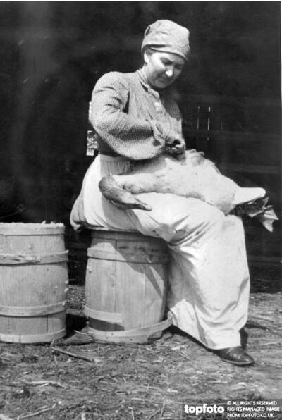 Farm woman plucking a goose._x000D_ 1904