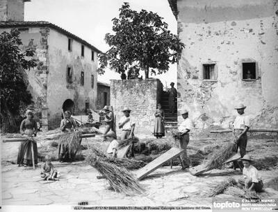 Threshing wheat in Calcinaia<datePhoto>1890-1900</DatePhoto>