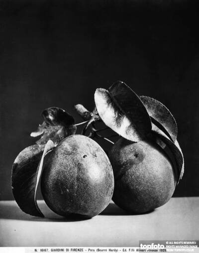 Pear (Beurre Hardy), Gardens of