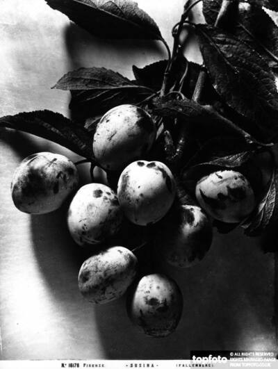 Bunch of plums.<datePhoto>1915-1920 ca.</DatePhoto>