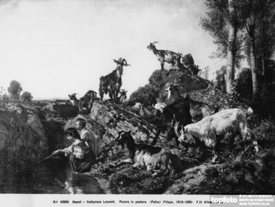Sheep grazing, painting by Filippo