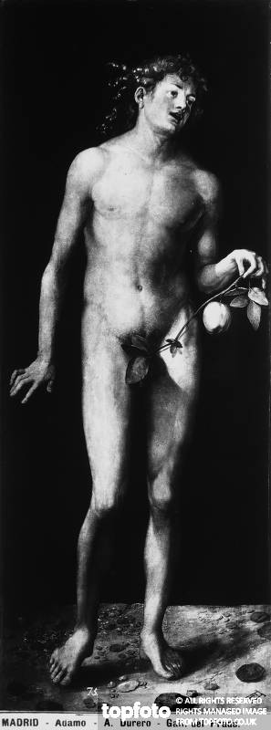 Adam, painting by Albrecht Durer,