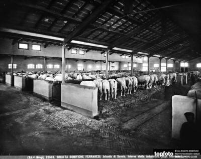 Interior of an industrial stable