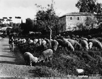 A shepherd takes his flock