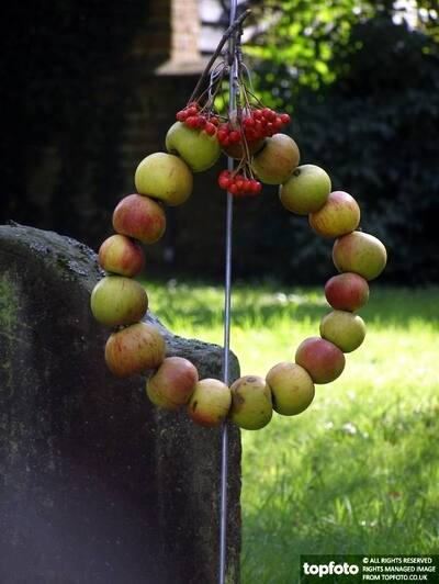 Harvest wreath of red apples