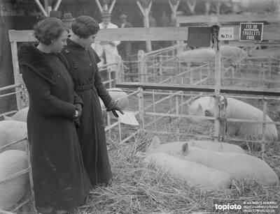 Two ladies admiring the pigs