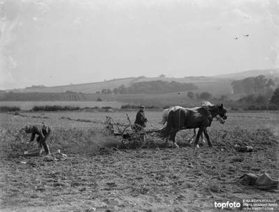 Farmers potato spinning in Farningham