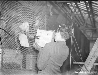 Monkey with film aspirations!._x000D_ Zoo film