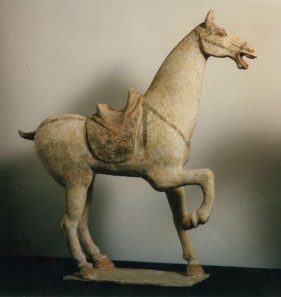 Cavallo sellato e bardato