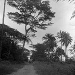 Paisagem de Cabinda