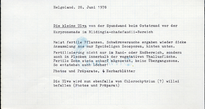 Ulva tenera Kornmann et Sahling