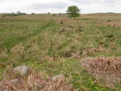 Beanley Moor 5