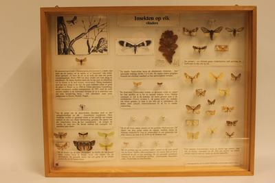 Insectendoos. Insekten op eik, vlinders.