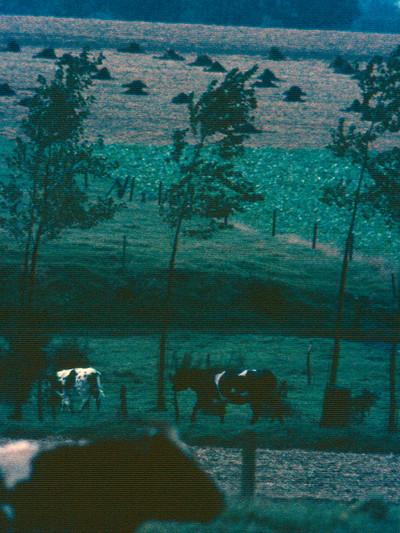 Landschap in het Pajottenland