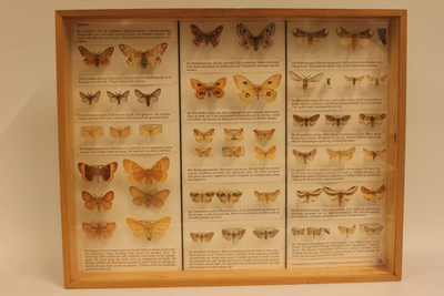 Insectendoos. Lepidoptera: Endromididae, Lasiocampidae en Drepanidae (spinners).