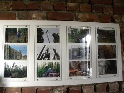 Foto's over hopteelt te Sint-Martens-Bodegem, Dilbeek.