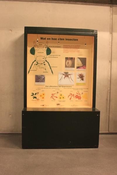 Mobiele museumkast: wat en hoe eten insecten?