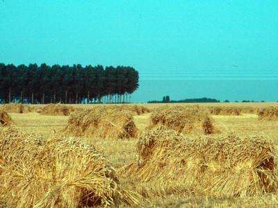 Landschap in Pepingen