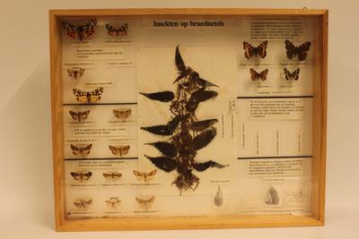 Insectendoos. Insekten op brandnetels.