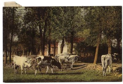 Landen landschap met koeien, Paysage Le Broek