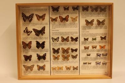 Insectendoos. Lepidoptera: Nymphalidae (parelmoervlinders), Satyridae (zandoogjes), Lycaenidae (pages, vuurvlinders en blauwtjes).