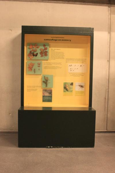 Mobiele museumkast: camouflage en mincry.