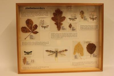 Insectendoos. Bladmineerders.