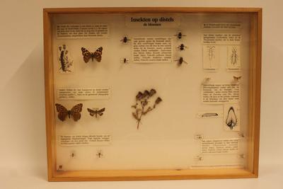 Insectendoos. Insekten op distels, de bloemen.