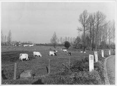 Landschapszicht in Tollembeek