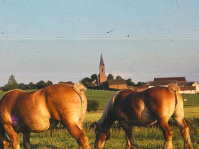 Landschap in Bellingen