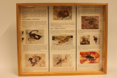 Insectendoos. Arachnida (spinachtigen).