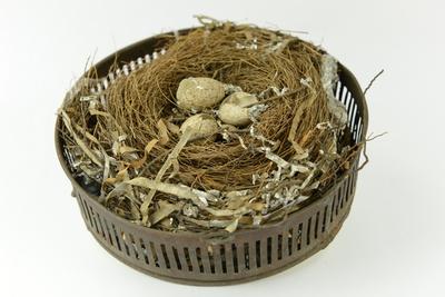 Vogelnest (merel) met 'chaff'.