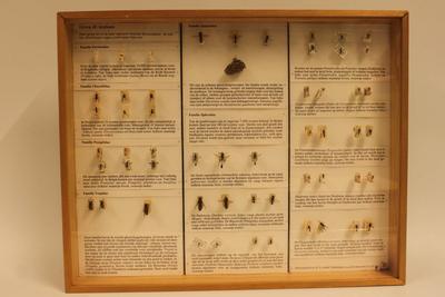 Insectendoos. Aculeata (mieren, plooivleugelwespen, graafwespen en bijen).