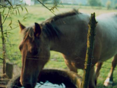 Paardenweide in Sint-Martens-Lennik