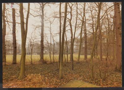 Een stukje bos naast het terrein van Schoonoord. Op de achtergrond zijn nog de sportvelden te zien.