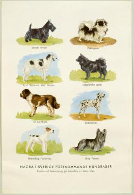 Några i Sverige förekommande hundraser