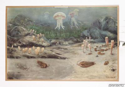 plansch, skolplansch, En försvunnen växt- och djurvärld. 1. Från kambriumtidens hav