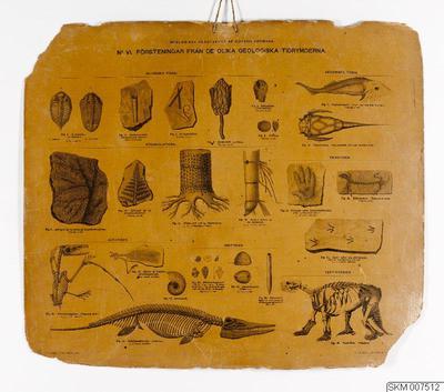 plansch, skolplansch, No VI. Försteningar från de olika geologiska tidrymderna