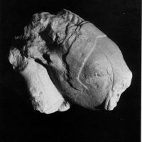 Fragmento de escultura, macho cabrío. Necrópolis ibérica de La Guardia (Jaén, España).