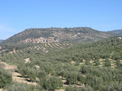 Oppidum ibérico de Cabeza Baja de Encina Hermosa (Castillo de Locubín, Jaén, España)