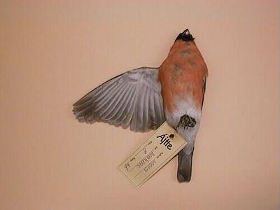 domherre, fågel