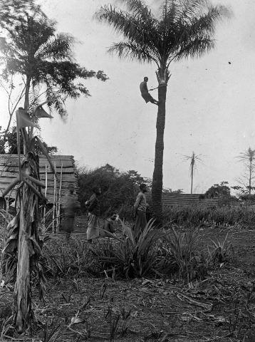 palm, klättrare, klättergördel, fotografi, photograph@eng