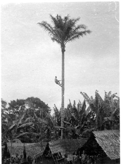 palmvin, palm, hydda, fotografi, photograph@eng