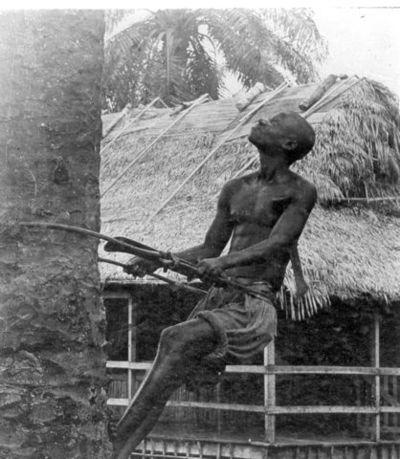 palmklättrare, fotografi, photograph@eng
