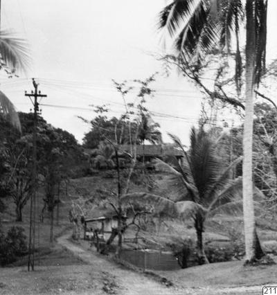 landskap, plantage, fotografi, photograph@eng